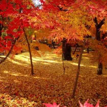 秋の京都といえば!